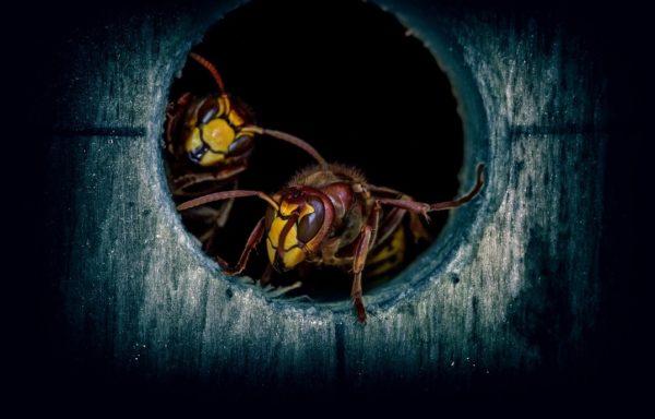 Některé nezvané hmyzí hosty můžete z domácnosti vypudit svépomocí, jiných se ovšem tak snadno nezbavíte. V takových případech volejte odbornou firmu.